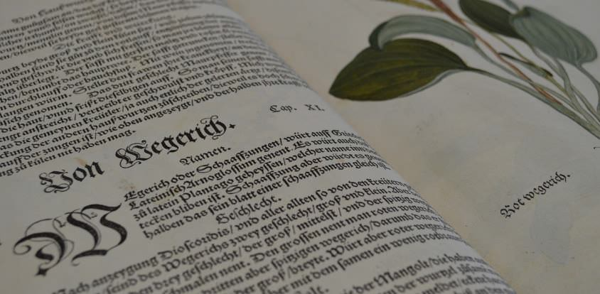 Allium Sativum L. – eine Bezeichnung mit unklarem Ursprung